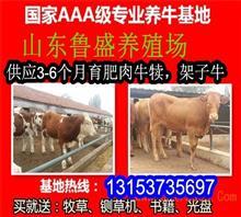 山东养牛养羊综合养殖场