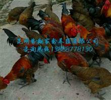 昆明勢翔家禽養殖有限公司