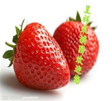 保定市满城区呈祥草莓种植园
