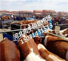 张北县牲畜交易市场