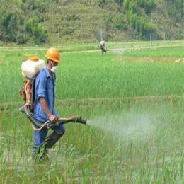 稻飞虱特效杀虫剂批发加盟