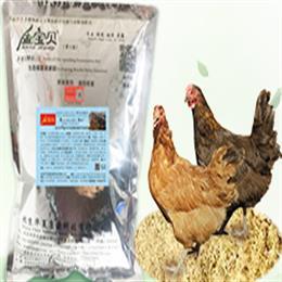 金宝贝客户发酵床养鸡经验之谈