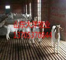 徐州/【农村简易羊舍的建造羊舍简易建设】价格,厂