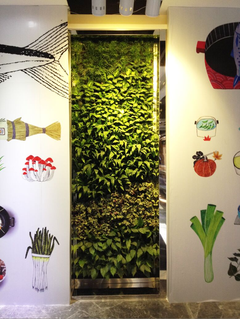 并防止植物根穿透到墙体结构中