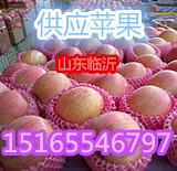 供应山东苹果/山东苹果最大批发基地