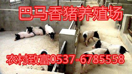 渭南香猪打疫苗吗