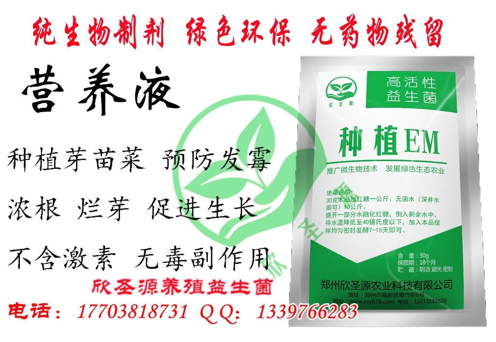 预防香椿苗烂菜浓根用的药在长治哪里有卖