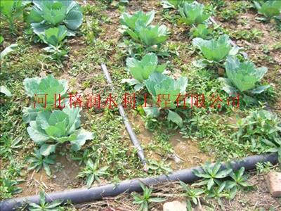 应用广泛 临猗县滴灌厂家塑料滴水带