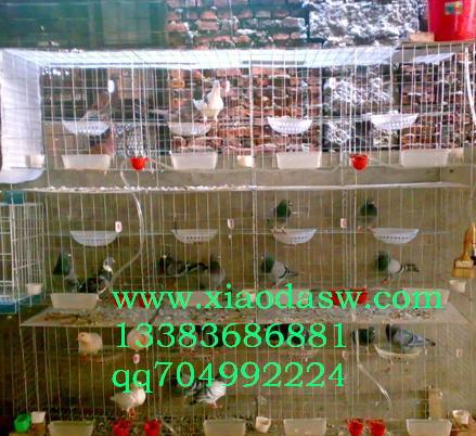 供应鸽子笼 兔子笼 狐狸笼 鹌鹑笼 鸡笼