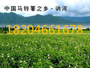 土豆批发黑龙江土豆生产厂家