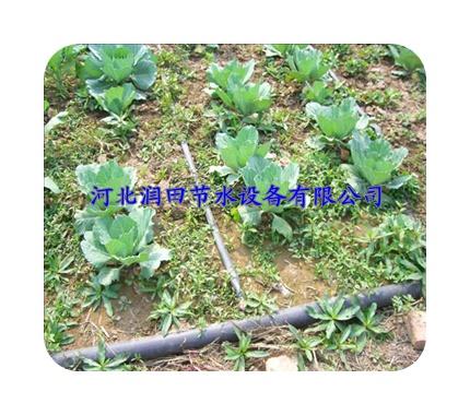 陕西、湖南、湖北、江西   贴片滴灌带适用于作物:草莓、黄瓜、西红