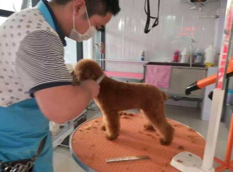 【图】沈阳皇姑区宠物医院【恒爱】沈阳皇姑