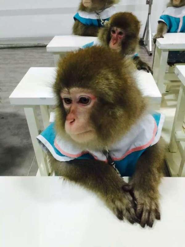 马戏团动物表演      马戏团动物表演安徽省宿州市