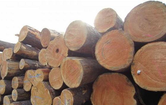 厂家,图片,木材