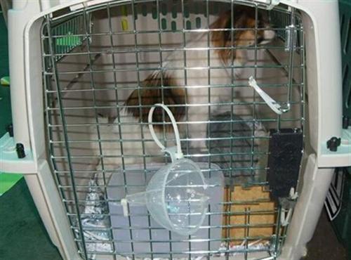 野生动物运输申请表