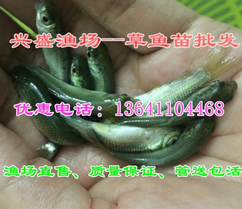 北京放生鱼出售