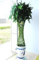 西城绿植花卉租赁公司