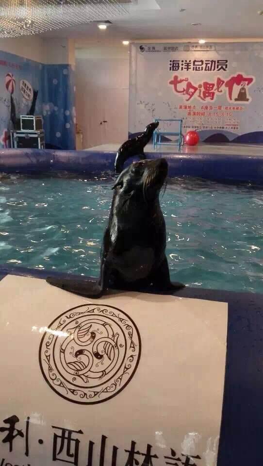 滑稽海狮海豹夏日互动欢乐来袭