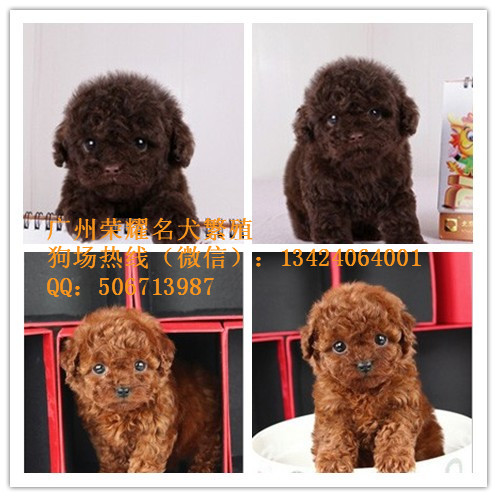 广州上下九附近哪里有卖宠物狗
