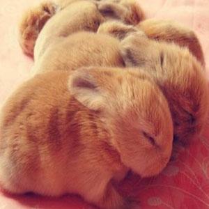 供四川幼兔和成都獭兔行业领先