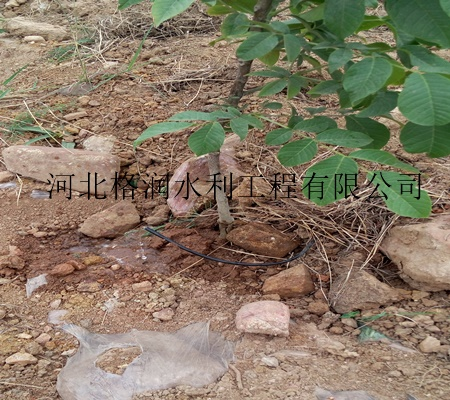 河北小管出流设备 优质果树小管出流