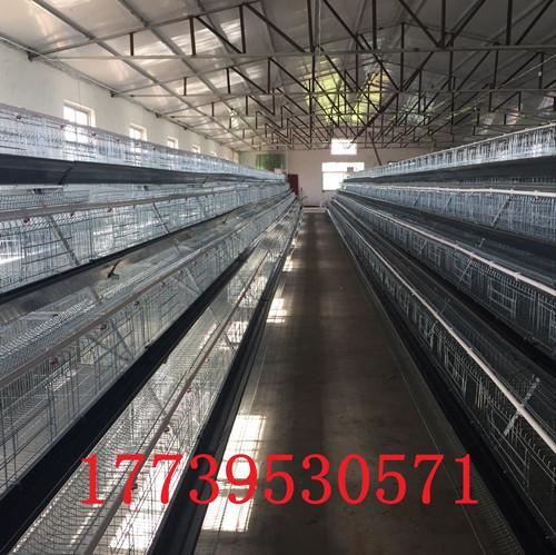 河南金兴设备厂家直销阶梯式鸡笼设备优质镀锌