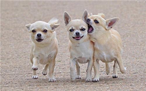 龙泉驿宠物、宠家乐宠物用品、宠物专卖