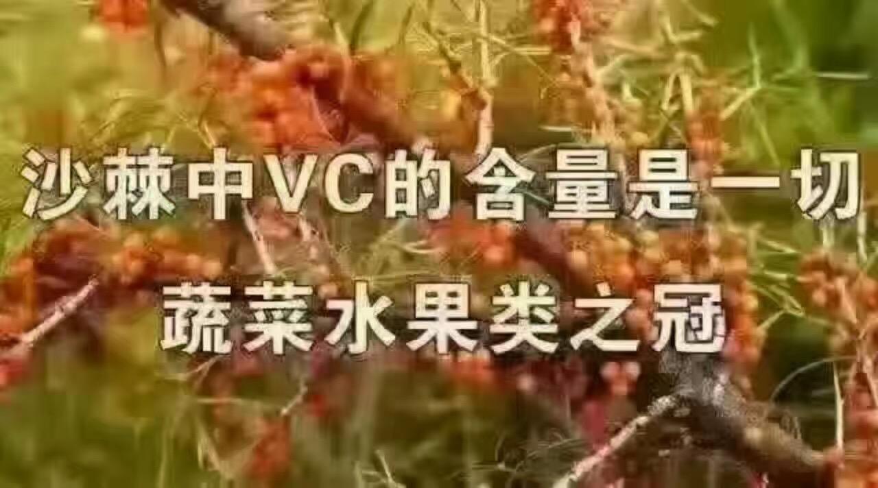 三明市鼎鑫沙棘排湿招商加盟/最低加盟多少钱