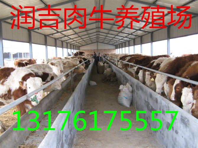 小肉驴多少钱一斤多少报价