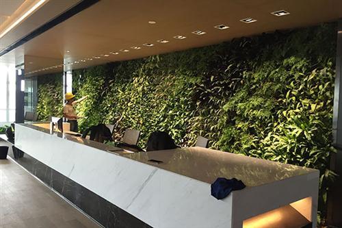 植物墙厂家、万盛植物墙厂家、和泓景观(多图)