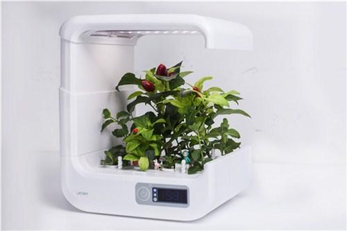 自动苗木植机 泱佑供质量好的自动苗木植机