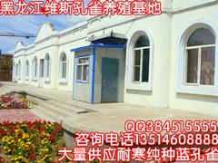 黑龙江哪里有孔雀养殖场卖孔雀