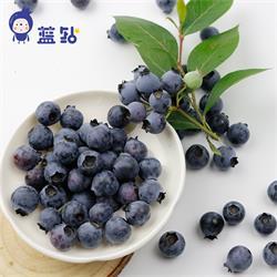 四川生态新鲜蓝莓 蓝钻蓝莓鲜果+蓝钻蓝莓,