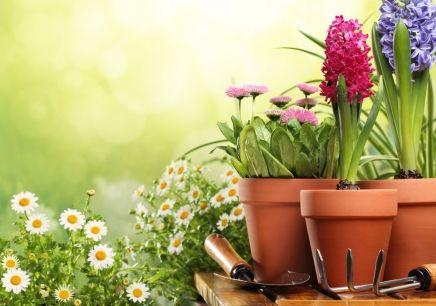 想考花卉园艺师去哪