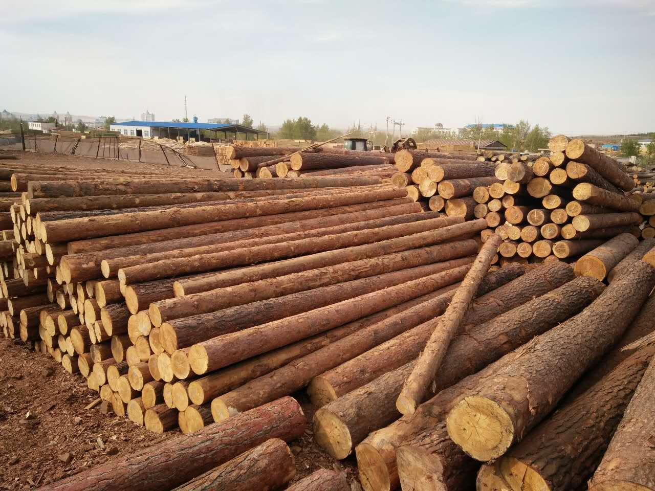 满洲里木材加工批发,俄罗斯樟子松原木,樟子松防腐木,满洲里志立木制品贸易有限公司