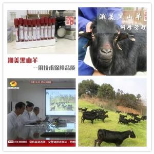 湘美黑山羊主题农庄