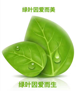 绿叶大生活产品怎么样