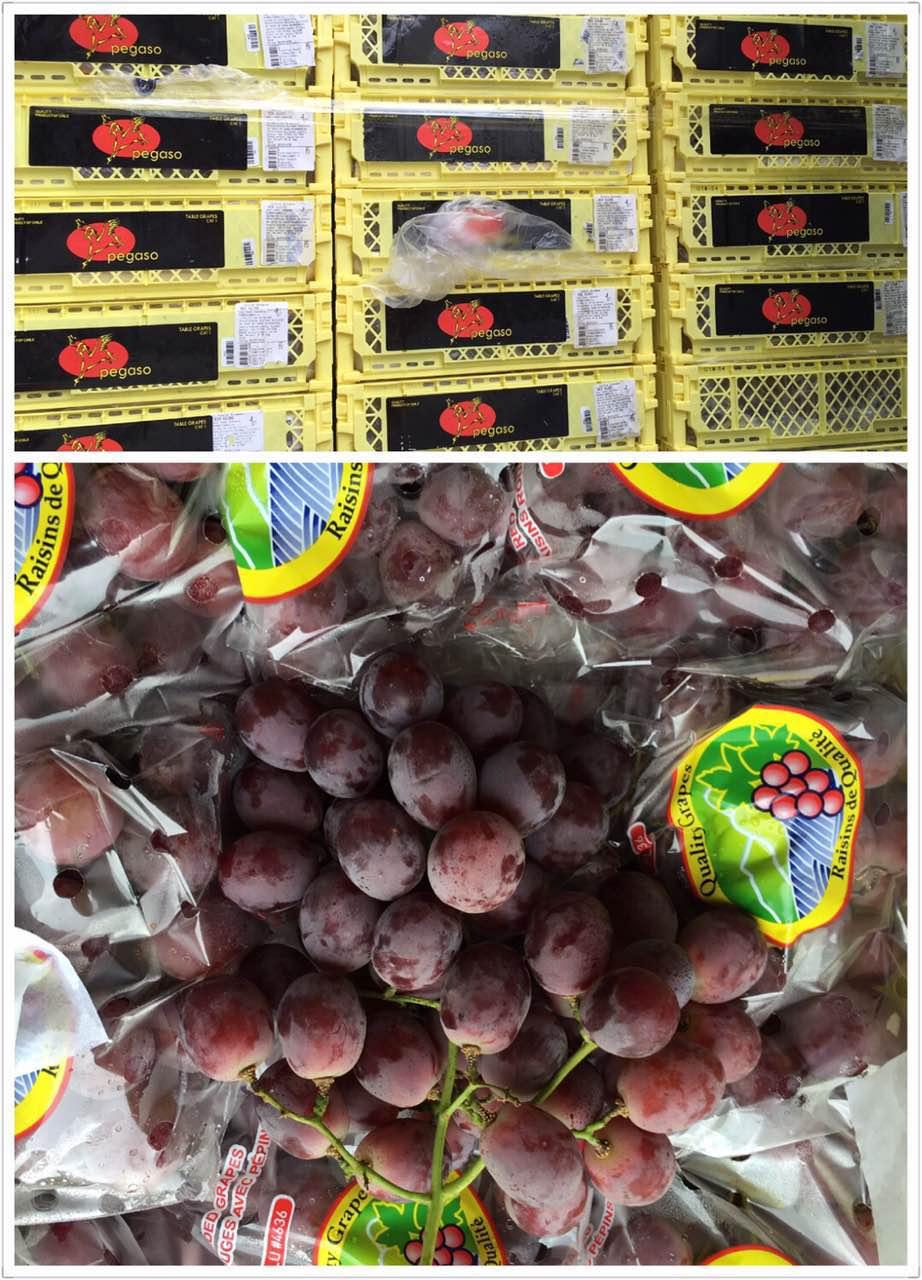 水果批发收购商