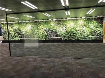 杭州植物绿墙养护 惜绿公司 植物绿墙养护采购