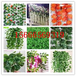 壁挂藤条植物厂家价格