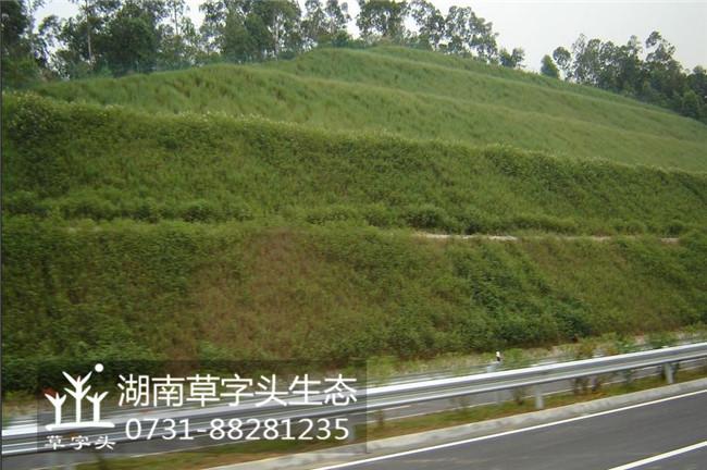 湖南草字头生态生态护坡