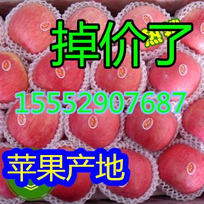 山东万亩嘎啦 美八苹果产地批发价格