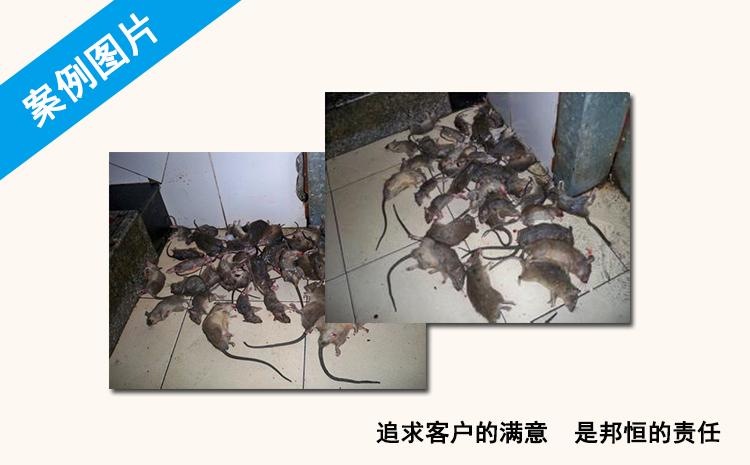 家里有老鼠不知在哪买老鼠药nxnhshbdjyb