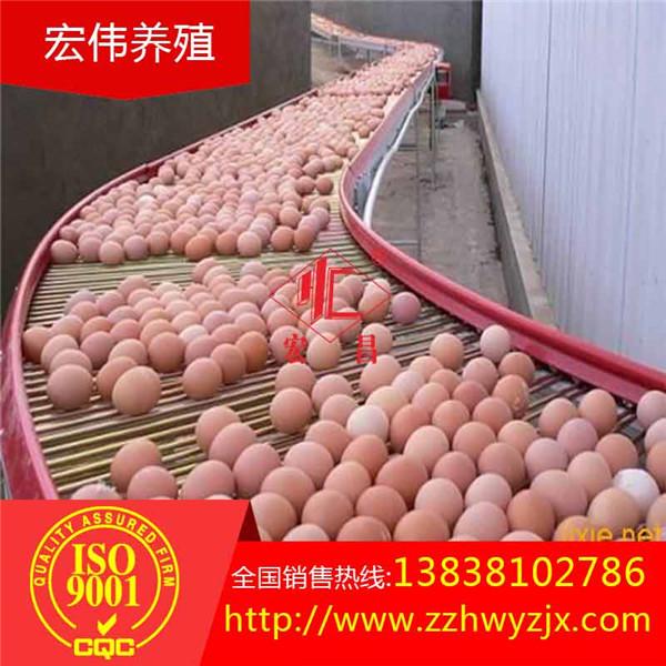蛋鸡养殖设备阶梯式全自动捡蛋机集蛋机厂家直销