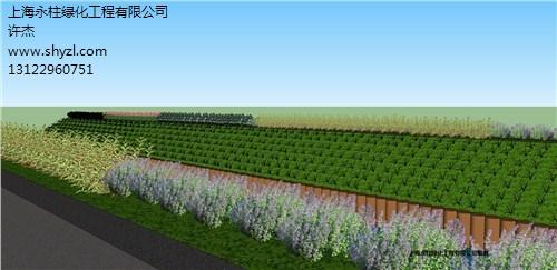 上海别墅植物绿化设计公司 办公室绿化价格 永柱供