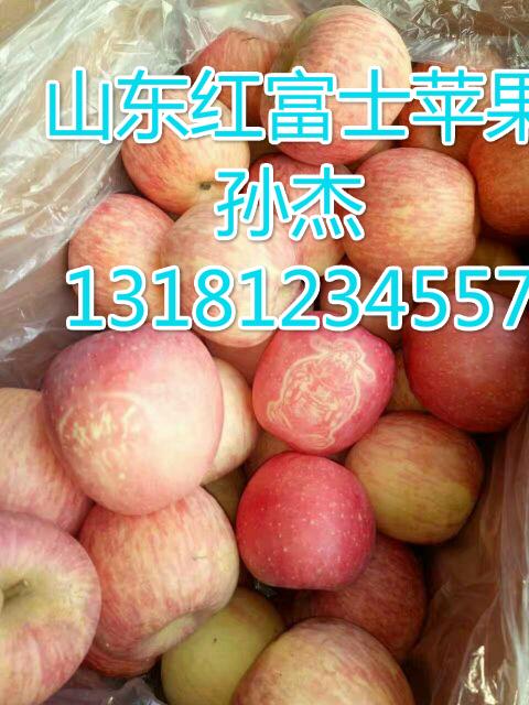 红富士苹果批发13181234557