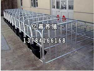 泊头市亿嘉养猪设备生产销售母猪用定位栏
