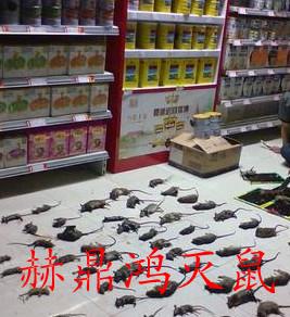 桂林赫鼎鸿灭鼠控虫公司白蚁红火蚁防治