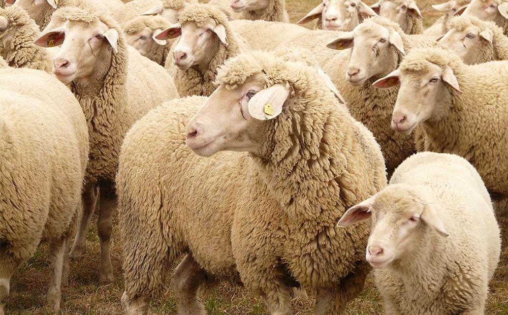 羔羊代乳粉生产厂家北京中博特