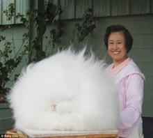吉林吉林市%长毛兔养殖场